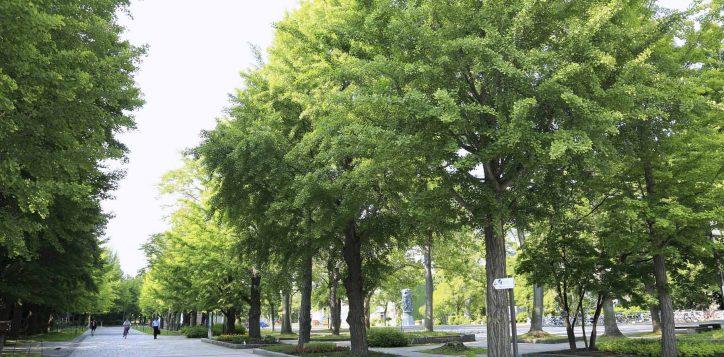nakajima-park-2